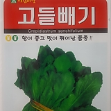 고들빼기씨앗(3000립)|