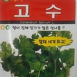 고수씨앗(300립)|