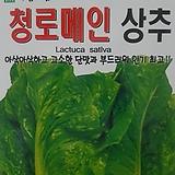 청로메인씨앗(1000립)|