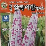 알록이찰옥수수씨앗(80립)|