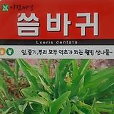 씀바귀씨앗(100립)|