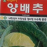 양배추씨앗(100립)|