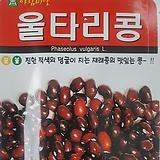 울타리콩씨앗(30g)|