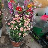 꽃기린  2번 핑크|