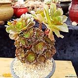 샐러드볼철화 (부러진자국잇어요)|Salad bowls