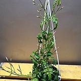 학자스민걸이( 꽃이 피면 향기가 가득해요) |