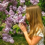 라일락나무 외목수형 퍼퓸 카사블랑카♥화분상품 라일락 나무♥전국 노지 월동|