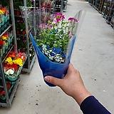 랜디제라늄 소품  진분홍 공기정화식물 꽃 초화 32|Geranium/Pelargonium