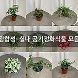 광합성- 실내 공기정화식물 모음|
