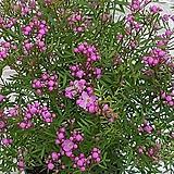 ♥피나타 예쁜 핑크꽃♥|