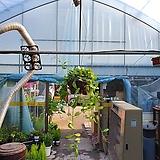 디시디아그린왕반볼 공기정화식물 수입식물 공중식물 99 |