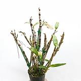 꽃이 예쁜~금성옥원 |