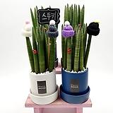 스투키 실내공기정화식물 인테리어화분 전자파차단 키우기쉬운식물 거실화분