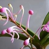 꽃이예쁜~체리브로섬 |
