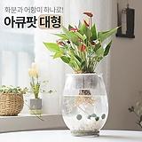 꽃이피는마을 아큐팟(대형) 화분과 어항이 하나로! 키우기쉬운식물 실내공기정화식물