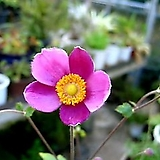 꽃이 예쁜~추명국|