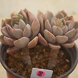 (4月)핑크프리티88