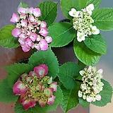 분홍수국 소품 