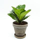 떡갈나무(소형)토분 세트|