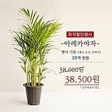자가수정 산머루 화분상품 대품♥화분재배용 산머루