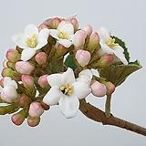 분꽃나무~~향기가 좋아요~~|