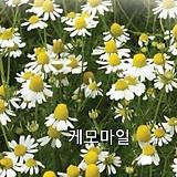 케모마일[허브씨앗]