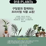 벤자민 40~70cm 중대품 149 공기정화식물|