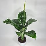 센세이션스파트필름 꽃피는센세이션 공기정화식물 한빛농원