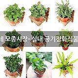 갑조네 모종시장- 실내 공기정화식물 모음 