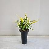 금기 동양난/공기정화식물/반려식물/온누리 꽃농원|