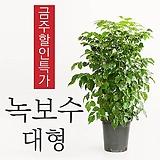 얼룩이옥수수 1개(품절->목요일부터 순차배송)