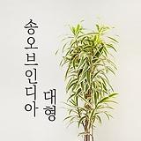 [特价]송오브인디아