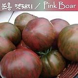 분홍 멧돼지 Pink Boar  중간 크기 토마토  달콤한 희귀토마토 교육체험용 세트 