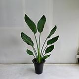 꽃피는 극락조/공기정화식물/반려식물/온누리 꽃농원|
