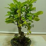 생명력 500ml-스트레스 극복/동물성 콜라겐 아미노산/다육이 야생화 분재 식물영양제