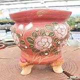화4. 꽃비즈분홍화분