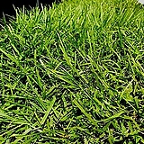 잔디35개국내100%생잔디재배 산소 정원 각종 시설보강 