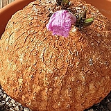 아프리카식물 보루시아나(예쁜꽃이펴요~) Echeveria Lucy