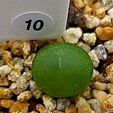 Ratum(r라튬) 10|