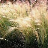 그라스 털수염풀 포트 5개|