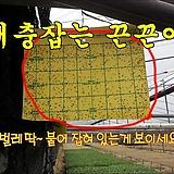 [양면끈끈이]왕흰나방끈끈이 5장-해충(벌레) 퇴치 하우스끈끈이/온실/살충/친환경/나방제거|
