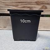 사각 플라스틱 화분 10cm 플분|
