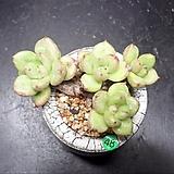 아보카도크림 4두|avocadocream
