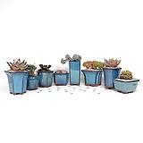 미니 꽃 장식 콩 화분 12개 세트 화분망 이름표 포함 다육 식물 원예