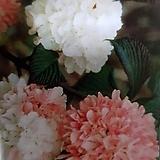 오데마리 분홍|