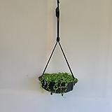 콩난걸이/공기정화식물/반려식물/온누리 꽃농원|