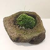 이끼테라리움 바솔트테라리움 실내정화식물 식물인테리어 공기정화화분|