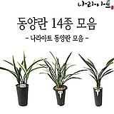 동양란모음/난/동양란/서양란/난모음/식물/꽃/나라아트|