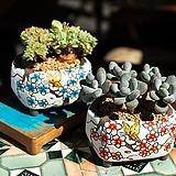 아르미수제꽃분 다이카페  