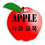 3년생 사과나무 묘목 품종별 모음♥옵션 다양 